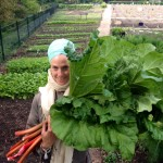 Rhubarb Crumble - Super fresssh!